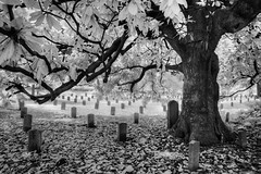 And finally, peace (Jon Dickson Photography) Tags: oakland cemetery atlanta atl clouds trees beautiful springtime ancient old