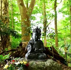 「森にたたずむ仏さま(先週日曜撮影) ~市川市真間・木内ギャラリーの森」 The Buddha Statue in Woods of the Camphor Trees in Kiuchi Gallery (Taken Last Sunday) Location: Mama,Ichikawa city,Chiba,Japan  おはようございます。 こないだ木内ギャラリーの森で撮った風景をもう1枚お届けします。  新緑あふれるクスノキの森を散歩していると、木々に囲まれてひっそりとたたずむ仏さまに出会いまし