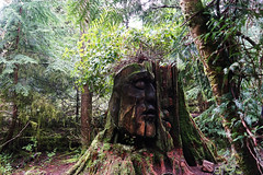 Vancouver-Stanley Park (Thisissophia) Tags: stanleypark vancouver canada nature tree sculpture treetrunk carving wood structure forest green human face