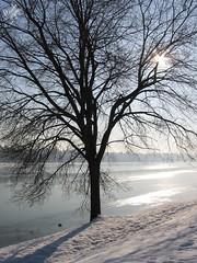 Ghiaccio all'Idroscalo (diegoavanzi) Tags: ghiaccio ice gelo frost idroscalo milano milan italia italy lombardia lombardy albero tree sole sun reflections riflessi inverno winter neve snow