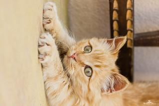 stretching 😻