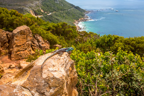 Kaapstad_BasvanOort-113