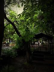 In the courtyard (Anna Gelashvili) Tags: дерево tree сад garden tbilisi georgia тбилиси грузия nutsubidzeplato საქართველო თბილისი ნუცუბიძისპლატო ხე ხეები leaf