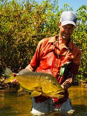 Peacock Bass - Kendjam (Kendjam - The Kayapo Legacy) Tags: kayapo flyfishing kendjam amazon rainforest brazil untamedangling jungle