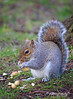 SquirelBristolWMCLR (jason.timbrell) Tags: bristol squirrel nuts cabottower tower animal nature wild