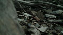 Vallée Miniature 2 (Astral Eye) Tags: nature naturel miniature rocher pierre caillou forêt rivière minéral minéraux extérieur macro mineral sol flou couleur