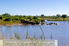_DSC4935 copy (naturephotographywildlife) Tags: kruger wildlife scenery animals birdlife a99ii africa park