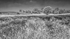 Field Landscape (Martine Lambrechts) Tags: field landscape nature tree