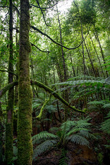 Australian Rain Forest. (Travellers Travel Photobook) Tags: forest fangi nature australia macro habitattree environment conservation worldenvironmentday australianrainforest adatree largetree