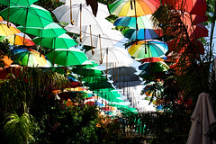 Umbrella street (vladimirvarbanov) Tags: cyprus paradise kit lens digital photography umbrela