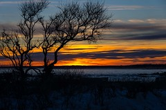 Sunset Watch [Explore June 6, 2017] (Bud in Wells, Maine) Tags: kennebunkport spring sunset tree winter atlantic coast maine