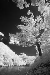 Along the Narrows (DRCPhoto) Tags: irconverteddslr canon5d digitalinfrared cheatriver westvirginia