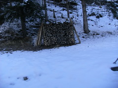 ...drying... (project:2501) Tags: wengen jungfrauregion suisse switzerland snow ski travel train bahn wengernalpbahn mountainrailway cograilway theviewfromhere morning morninglight bluelight blue bluebleu bleu inthemountains mountains mountain rock pinetrees alpinefauna logs dryinglogs ground snowontheground