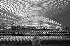 Liège Guillemins 5 (ohank1951) Tags: cityview trains shadows symmetry bw blackandwhite monochrome architecture steel concrete glass lines curves gare station bahnhof calatrava luikguillemins luik lüttich liègeguillemins belgië labelgique belgium canoneos1100d efs1022mmf3545usm