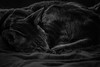 Eddie (@Merssan) Tags: cat mylove eddie sleeping sleepyhead oriental