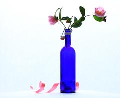 Blue bottle (alideniese) Tags: stilllife flower camellia camelliasasanqua bottle bluebottle whitebackground flora 7dwf ribbon pink white blue colour