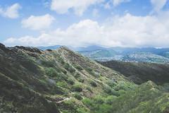 Surrounded by Nature 2 (Kou Thao) Tags: animals nature wildlife hawaii scenery photograhy kokohead adventure vintage vibes tropical airplane sky sunset clouds traveler luau horse jungle