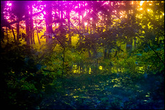 20170605-072 (sulamith.sallmann) Tags: landschaft natur blur bunt bäume colorful effect effekt filter folientechnik forest landscape nature trees unscharf wald brandenburg deutschland deu sulamithsallmann