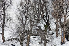 Snow 26 ... (Bijanfotografy) Tags: nikon nikond800 nikon180mm28afd india jammukashmir jk kashmir sonamarg snow mountainside trees