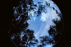 Bosque de invierno (● diario de viaje ●) Tags: lomo lomofisheye lomography lomografia film filmnotdead 35mm 100a dobleexposicion dobleexpo multipleexposicion bosque mar oceano ocean atlantico fisheye ojodepez toycam diariodeviaje fotografiadeviaje