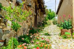 Main Street, Phikardou (George Plakides) Tags: phikardou cyprus village spring street flowers vernacular traditional architecture house