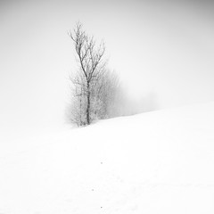 faded (ArztG.|Photo) Tags: frozen fog winter silence bw le love trees austria atmosphere arztg|photo