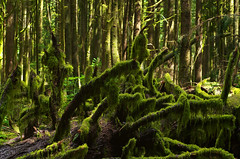 Moss in the Sun (Kristian Francke) Tags: moss green sun outdoors nature natural pentax helios 44k forest woods woodland bc canada british columbia tree trees branch plant plants day sunny sunlight