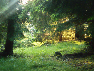 En forêt du Ché