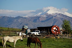 Ah, Spring (Let Ideas Compete) Tags: horse horses mtmeeker longspeak snowcovered snowcapped clouds farm rural bucolic junk fence hills mountain mountains whitehorse twohorses tractor hillside mountainside rockymountains farmscene