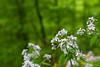 Waterfall Flowers (matthewjpollard) Tags: 50mm a6000 macro flowers germany swabian bokeh