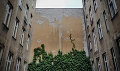 Ściana (maciey24) Tags: wall ściana bluszcz rośliny plants building budynek kamienica tenementhouse tenement house łódź city cityoflodz lodz cityofłódź ivy okna windows okno window architecture architektura
