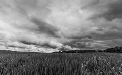 Field of clouds (V Photography and Art) Tags: clouds storm stormyclouds countryside uk britain england kent wheat dark wideangle view viewpoint compresion bw blackandwhite cloudscape
