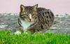 Mogli (Sandra Hieber) Tags: cat animal canon canon1740mml eye augen katze tier