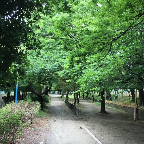 雨あがりの散歩道