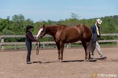 JBC_8338.jpg (Jim Babbage) Tags: krahc annualshow appaloosa horses