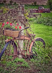 modes of  (vintage)transport... (HTT) (BillsExplorations) Tags: truck bike bicycle rust vintage old farm flowers truckthursday decay ruraldecay wisconsin country ford fordtruck