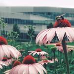 Bee happy.