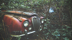 'Retired' (EXPLORE) (Timster1973 - thanks for the 13 million views!) Tags: jaguar jag bokeh decay overgrown undergrown green ivy explore ue urbex uk greenery canon tim knifton timster1973 abandoned abandon derelict decaying decayed british ruins ruin car carmargeddon barn find vehicle rust rusty rusting rusted timster house backyard color colour cars graveyard vehicles lost exploration urban eurotour europe old still silent vintage empty left behind growth bonnet m3 22mm f2 mirrorless