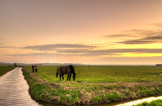 Horses enjoying their dinner.