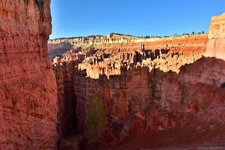 Natural Sculptures|Bryce Canyon National Park, Utah