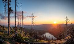 Sonnenaufgang im Böhmerwald (ralphjanker) Tags: czech republic lake see tschechien tschechische republik sunrise sonnenaufgang deadwod totholz spruce fichte bohemia böhmen