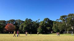 A Beautiful Morning for Soccer... (Jofotoe) Tags: mpt550 matchpointwinner