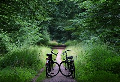 Meeting - Go Green (annazelei) Tags: biking lights duo pair nature natura wald forest canon eos summer holiday meeting path pathway ridingcut bicycle bike cycle ironhorse trekking woods green enjoy cycling cyclingtour bicycling personal wheel wheels relax happy silhouette gogreen smileonsaturday