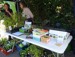 RFGN Seed swap at Reading Water Fest (karenblakeman) Tags: reading uk 2017 june waterfest riversidewalk kennetandavoncanal food4families rfgn readingfoodgrowingnetwork vegetables plants chillies tomatoes courgettes squash sweetcorn basil parsley seedswap