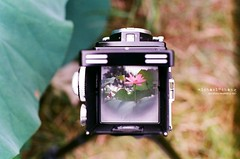 初荷出水清香嫩 ([M!chael]) Tags: nikon f3hp nikkor 5014 ai kodak ultramax400 film manual flower taiwan tainan rolleiflex tlr