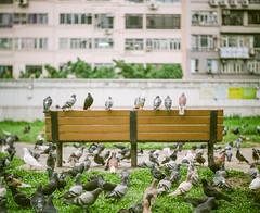 Birds of Freedom (JaS Photoland) Tags: pentax67ii pentax bauschandlombbaltar100mmf23 baltar fujifilm fujifilmpro400h hongkong film