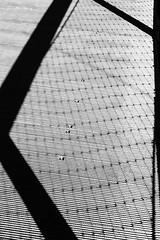 shadows 3 (Janelle Tong) Tags: janelle tong photography tony ward studio individual project upenn penn park bridges fence link crossing shadows black white
