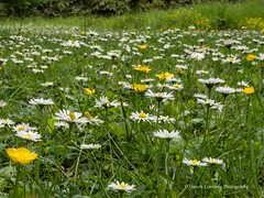 Clyne Gardens 2017 06 01 #18 (Gareth Lovering Photography 3,000,594 views.) Tags: clyne clyneinbloom botanical gardens flowers macro swansea olympus omdem10ii 30mm 30mmmacro garethloveringphotography