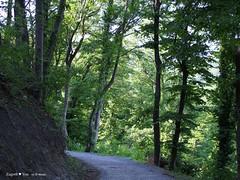 Miroslavac trail 6