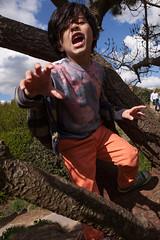 Sam Bournemouth-9.jpg (Reasonable Jim) Tags: bournemouth dante southbourne climbing tree treeclimbing